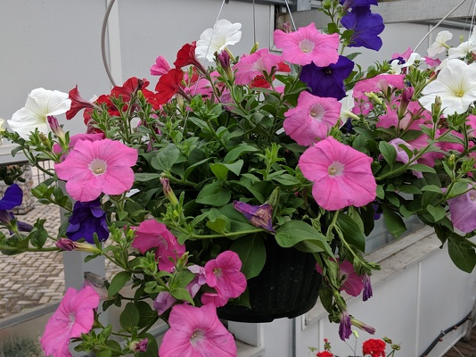 Sidney Flower Shop Florist In Sidney Ohio Oh Serving